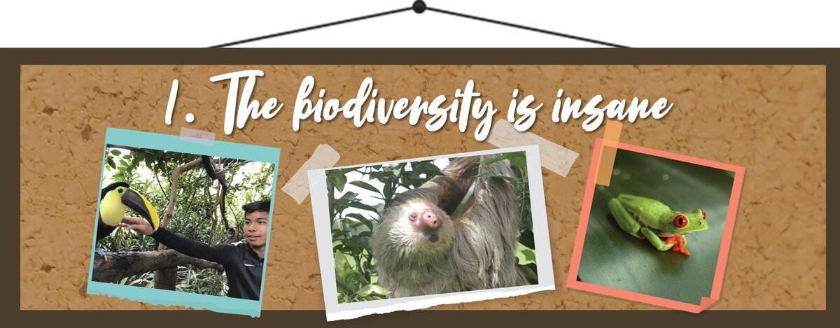 The Biodiversity is Insane